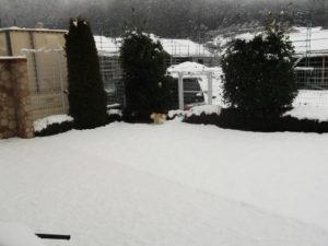 雪とワンコ