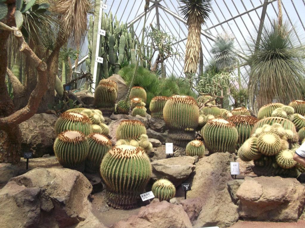 サボテンの温室